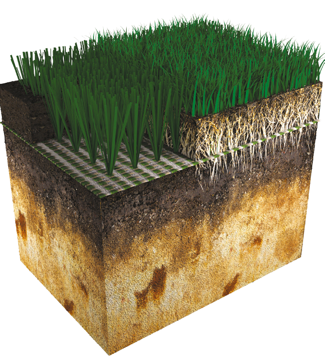 Visual system xtremegrass